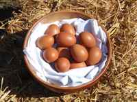 Chicken_eggs_sm_web